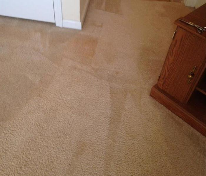 Pet Stained Carpet Cleaned in Spartanburg, SC After